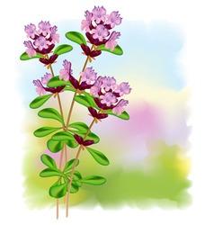 Thyme flowers vector