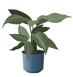 zebra plant with pot vector image