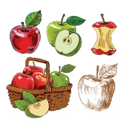 hand drawn apples vector image
