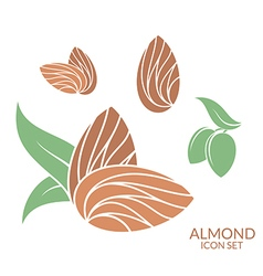 Almond Icon set Isolated fruit on white vector image