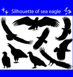 Collection of silhouettes of sea eagles vector