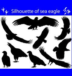 Collection silhouettes sea eagles vector