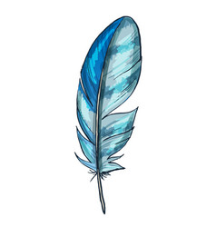 Colorful detailed blue bird feather isolated vector