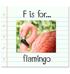 Flashcard letter f is for flamingo vector