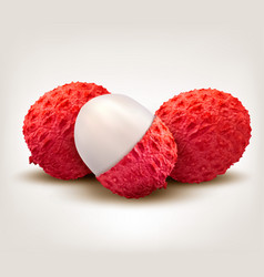 fresh lychee fruit vector image