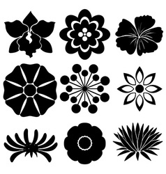 Group of floral templates vector image