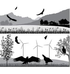 sea eagle in wildlife vector image