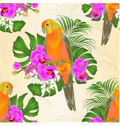 seamless texture sun conure parrot vector image