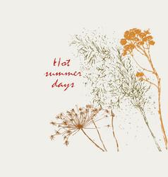 summer herbarium vector image