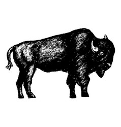 Bison icon grunge style vector