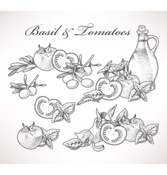 Basil and tomatoes vector