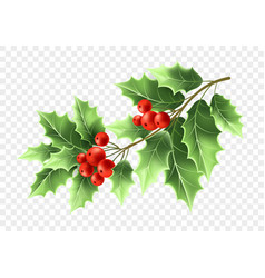Christmas holly tree branch realistic vector