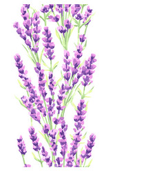 Lavender flowers seamless pattern watercolor vector