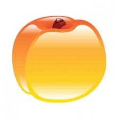 peach illustration vector image