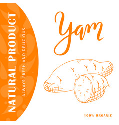 Vegetable element of yam hand drawn icon vector