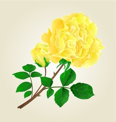 Yellow rose and rosebud stem with leaves vector image