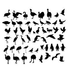 birds animal silhouettes vector image