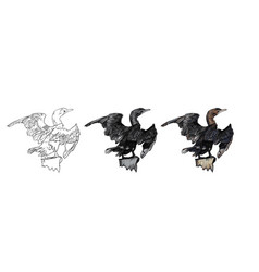 Drawing of little cormorant bird vector
