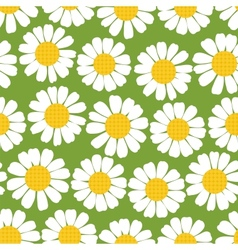 Seamless summer camomiles pattern vector