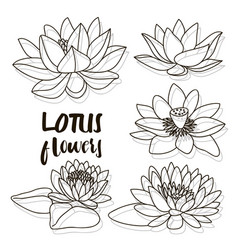 set of lotus flowers vector image