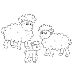 Sheep lamb and ram vector