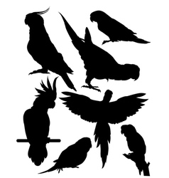silhouettes parrots vector image