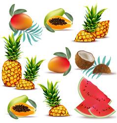 summer tropic fruits papaya pineapple fresh vector image