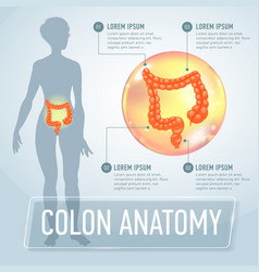 Colon infographics banner vector