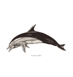 Dolphin hand drawing vintage engraving clipart vector