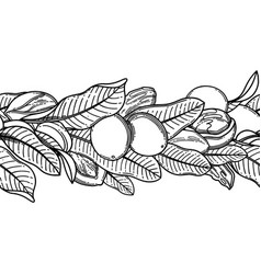 Graphic shea nuts and leaves repeated vector