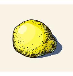 Lemon sketch vector
