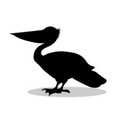 pelican bird black silhouette animal vector image