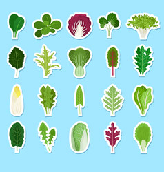 cartoon green salad leaves stickers vector image vector image