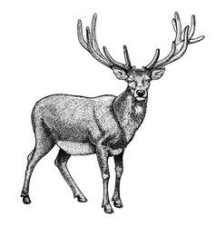Engraving reindeer vector