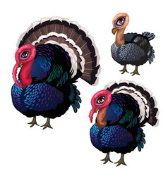 group of three turkeys of different ages vector image vector image