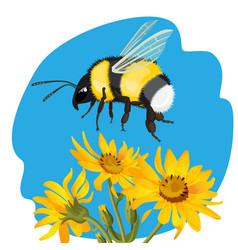 bumble bee flying over yellow flowers on vector image