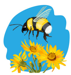 Bumble bee flying over yellow flowers vector