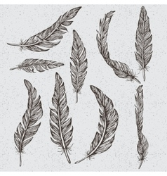Collection of the monochrome feathers vector