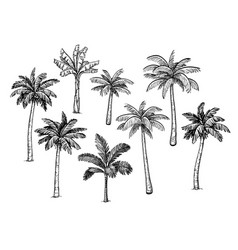 collection palm trees vector image