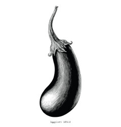 eggplant hand drawing vintage engraving on white vector image