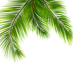 Exotic tropical background with palm leaves vector