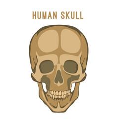 human skull image vector image