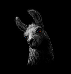 Portrait of a head of a llama on a black vector