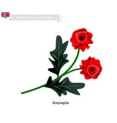 Tuberous Begonia Flower or Kimjongilia Flower vector image