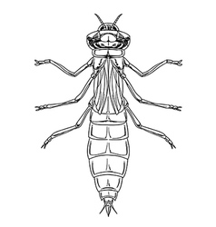 Dragonfly nymph vector image vector image