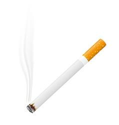 cigarette 02 vector image vector image