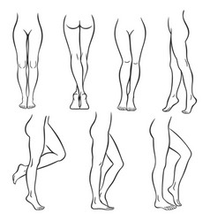Female legs vector