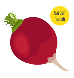 Garden radish in flat style with golden label vector