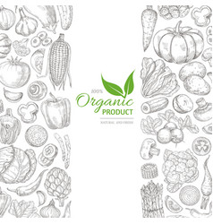 organic sketch fresh vegetables retro vector image