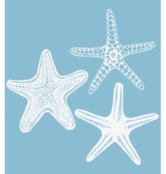 Set of hand-drawn starfishes vector